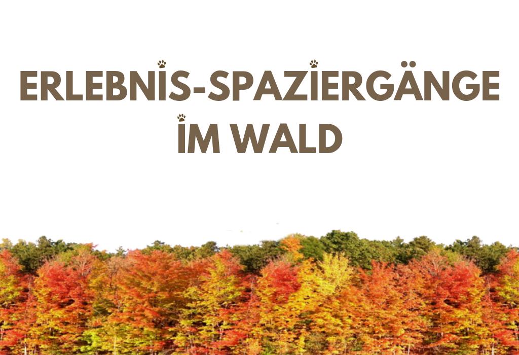 ERLEBNIS-SPAZIERGÄNGE IM WALD
