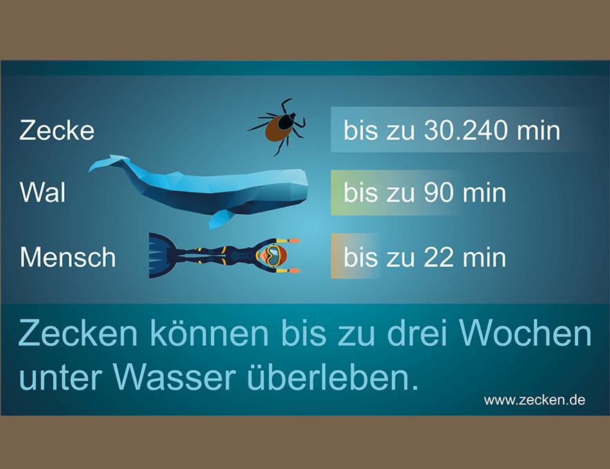 Zecken unter Wasser